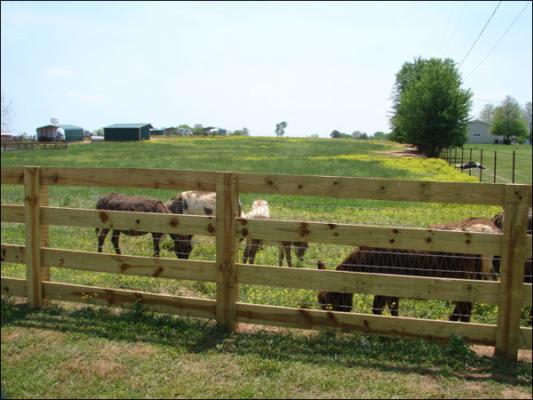Our New Arena At Half Acres Miniature Donkey Farm