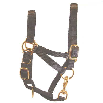 Miniature Donkey Adult Black Halter For Sale