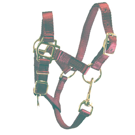 Adult Burgandy Miniature Donkey Halter For Sale