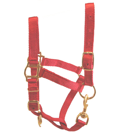 Adult Red Miniature Donkey Halter For Sale