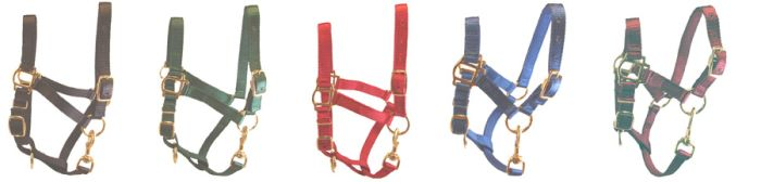 All Colors for Adult Miniature Donkey Halters for Sale
