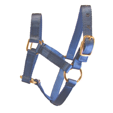 Weanling Blue Miniature Donkey Halter For Sale