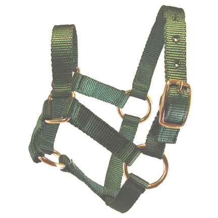 Weanling Green Miniature Donkey Halter For Sale