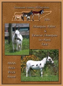 2011 Tennessee Donkey ASSociation's High Poiint Halter Jack & Reserve High Point In-Hand Jack!