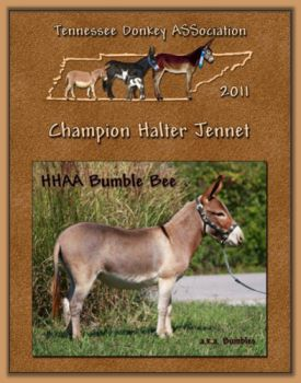 2011 Tennessee Donkey ASSociation High Point Halter Jennet!