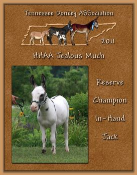 2011 Tennessee Donkey ASSociation's Reserve High Point In-Hand Jack!