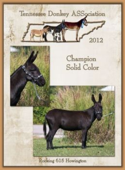 Champion High Point Color Donkey for Tennessee!