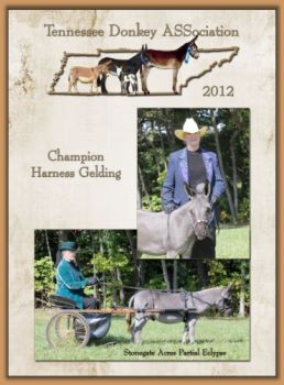 Champion Harness Gelding!