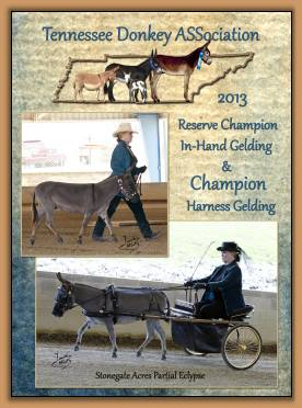 Mookie - 2013 Champion Harness Gelding