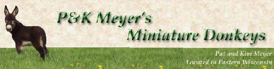 P & K Meyer's Miniature Donkeys located in Wisconsin