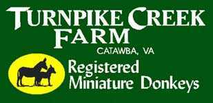 Miniature donkeys at Turnpike Creek Farm in Catawba, Virginia!