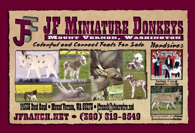 JF Miniature Donkeys in Mount Vermon, Washington